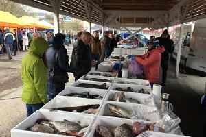 Fish market in Tallinn