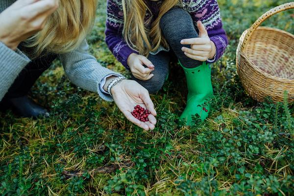 Best berry and mushroom picking spots in Estonia