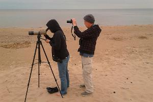 Birdwatching on the coast and in the forests of West-Estonia