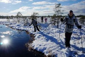 Hikes in Estonian bogs